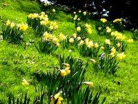 James S Bell School Gets More Flowers