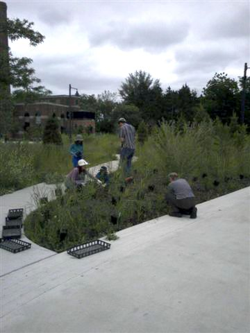 Weekend Planting Event at Colonel Sam Smith Park