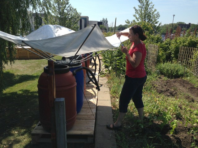 Community Garden at the Daily Bread Food Bank