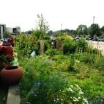food garden 7