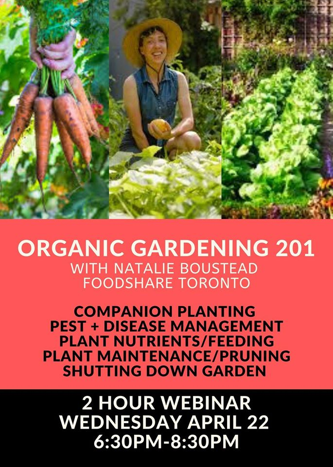 Organic Gardening 201 with Natalie Boustead Foodshare Toronto  Companion planting, pest & disease management, plant nutrients, maintenance and prunning. 2 hour webinar Wednesday April 22 6:30-8:30p.m.