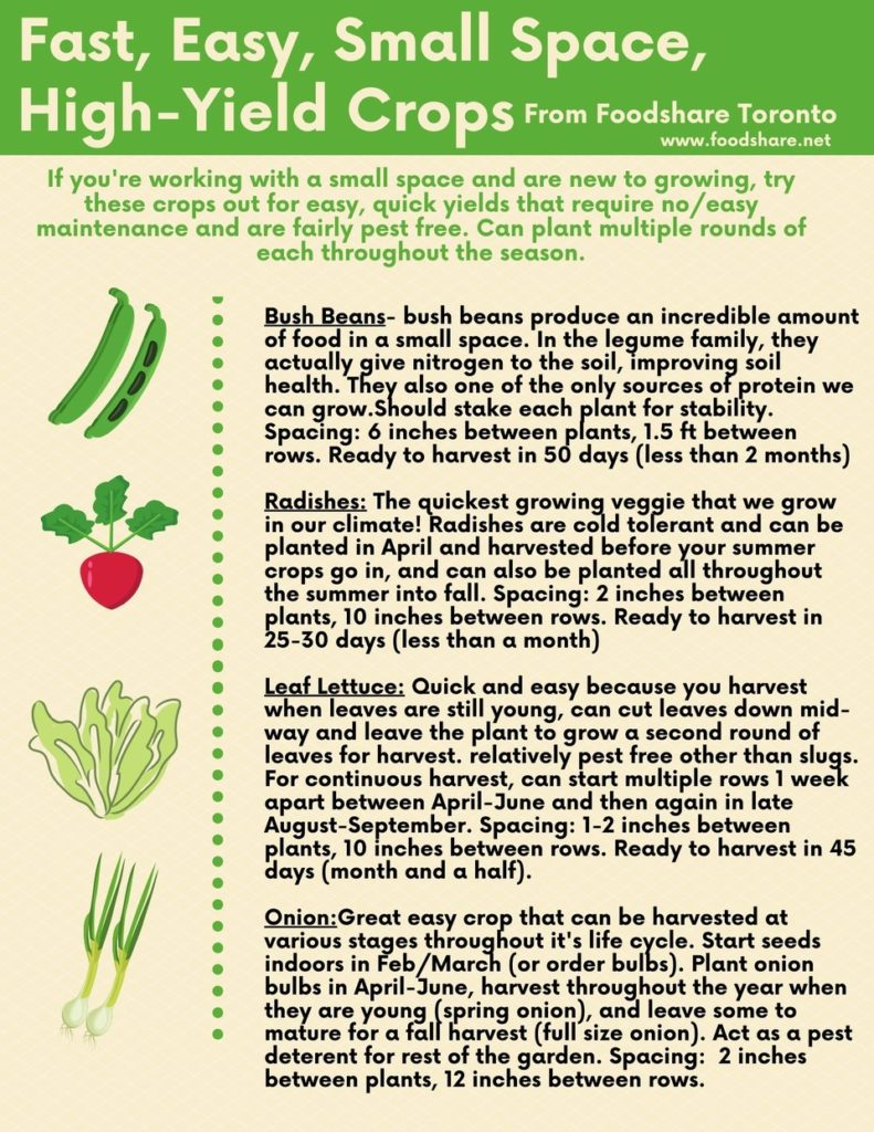 Fast, easy, small space high yield crops - bush beans - radishes - leaf lettuce - onions
